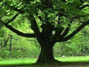 tree-355