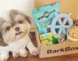 Influencer Marketing Bark box