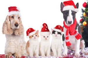 christmas-animals-5