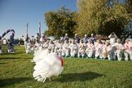 Holiday- Presidential Turkey