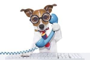 phone calls dog