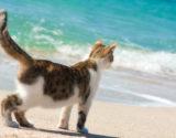B2B cat beach